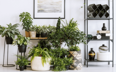Kamerplanten in huis: tips en inspiratie